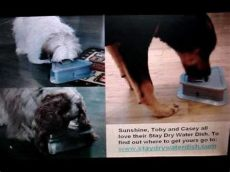 stay dry water dish uk dogs from stay water dish no more floors