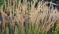 best grass for texas shade best grass for shade