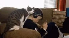 cat pay attention to me gif needy gif takecare takecareofme loveme discover gifs