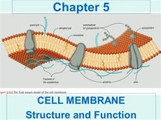 cell membrane function and structure prehospital emergency care