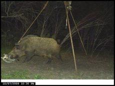 coon proof deer feeder deer feeder pvc raccoon proof 55 gallon feeder doovi raccoon - Diy Coon Proof Deer Feeder
