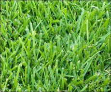 the best grass seed for florida best grass seed for middle florida home and garden designs