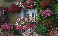 country cottage floral wallpaper beautiful flower gardens beautiful flower garden cottage garden flower names