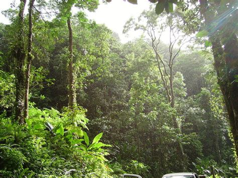 tropical rainforest climate conditions biological science picture directory