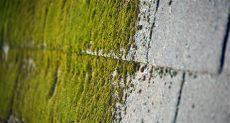 will roundup kill moss on my roof top ways to removing moss from your roof powell s roofing