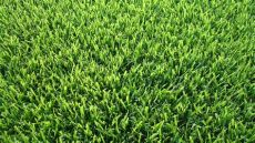 winterizer for zoysia grass the 6 most popular types of grass that grow in tennessee lawns lawnstarter