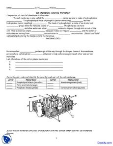 cell membrane coloring worksheet cell membrane coloring application of biology assignment docsity