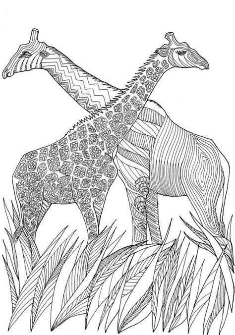giraffes amazing animals colouring pages joenay