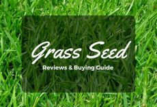 top best grass seed reviews 2018 high quality cheap grass seeds - Best Grass Seed Topper