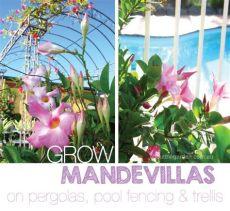 climbing plants for pergolas australia mandevilla large flower plant climber about the garden magazine