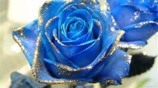 glitter flower wallpapers wallpaper cave - Glitter Rose Wallpaper For Mobile