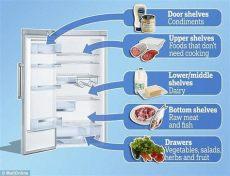 en que nivel debe estar el refrigerador la forma correcta de acomodar los alimentos en el refrigerador