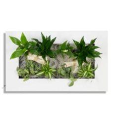 wandgarten innen kaufen wandbegr 252 nung im greenbop shop kaufen