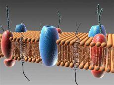 cell plasma membrane 3d model cell membrane 3d model cgstudio