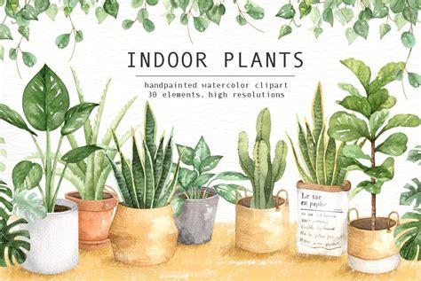 indoor plants watercolor clipart illustrations creative market