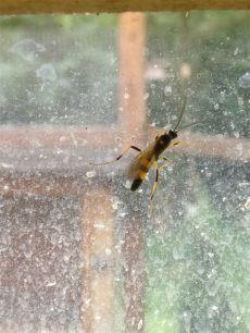 insektenspray gegen spinnenlaufer insekten und spinnen seite 212 allmystery