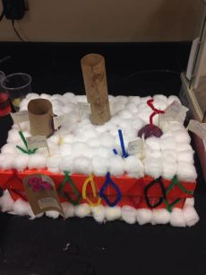 cell membrane model project ideas image by twehues on cell membrane model cell membrane biology projects health science