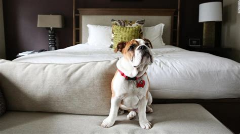 Are Hotels Pet Friendly.html
