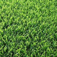 winterizer for zoysia grass zoysia varieties professionally installed san antonio landscaping