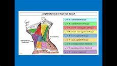lymphstau hals losen lymphknotenlevel im kopf hals bereich strahlentherapie prof hilke vorwerk