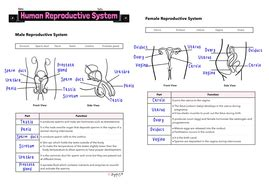 human reproductive system worksheet teaching resources