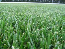 tall fescue grass types grass seed 101 8 of the most popular types