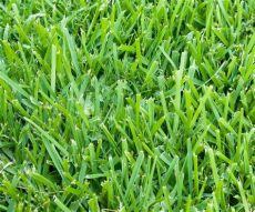 six types of grass for florida lawns irrigation sprinklers - The Best Grass Seed For Florida