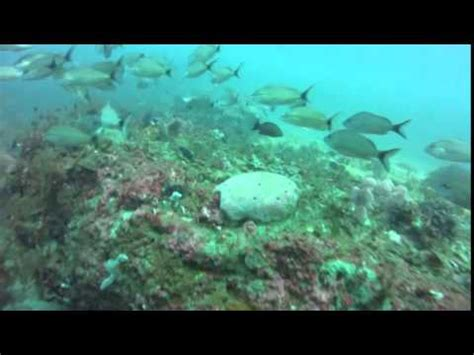 scuba diving destin florida september 5 2015 youtube