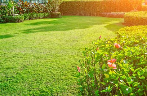 grow grass clay soil 5 simple steps