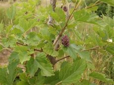 mulberry wallpaper hd mulberry wallpapers high quality free