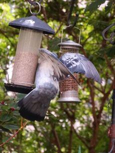dove resistant bird feeders dove proof bird feeders adinaporter