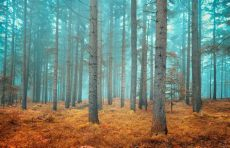 forest wallpaper murals for walls dreamy conifer forest wall mural muralswallpaper co uk