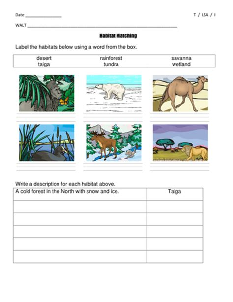 habitat matching worksheets differentiated year 2 key stage