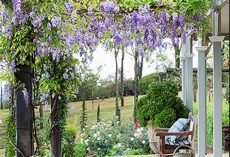 5 climbing plants for your pergola home beautiful magazine australia - Climbing Plants For Pergolas Australia