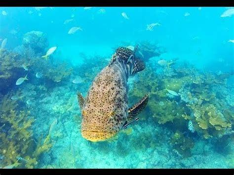 florida keys free diving goliaths sharks gopro 2013