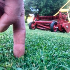 reel mower recommendations manual reel mower recommendations the lawn forum