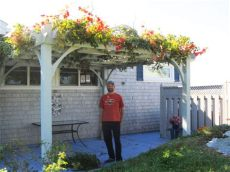 the most climbing plants for your pergola olt - Climbing Plants For Pergolas Nz