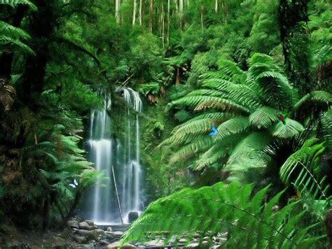 waterfall avec images paysage vert paysage paysage foret
