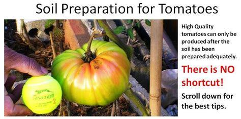 vegetable garden world soil preparation tomatoes