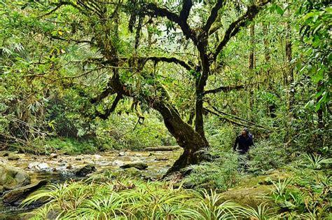 tropical rainforest plants conserve energy future