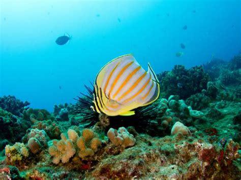 seasport divers open water certification hawaii discount