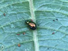 insekten und spinnen seite 187 allmystery - Insektenspray Gegen Spinnenlaufer