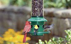 dove resistant bird feeders finally squirrel proof bird feeders explained