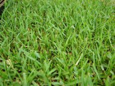 the best grass for florida the 5 best grass types for tallahassee fl lawns lawnstarter