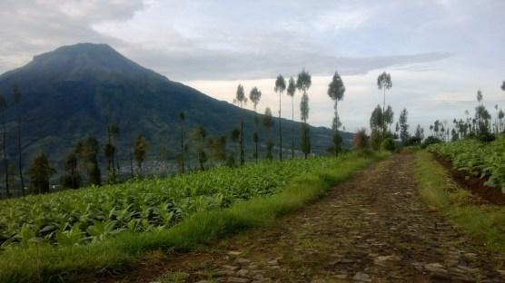 Suasana jalan ke Posong