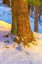 Sunlite Tree Trunk