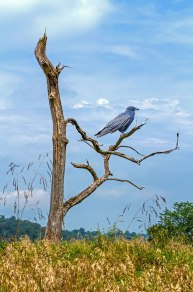 The Watching Bird
