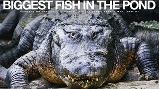 Biggest Fish In The Pond – Gym & Pre-Game Motivational Speech