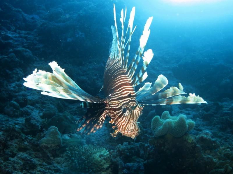 Reisebericht Tauchen Biyadhoo Malediven 2012