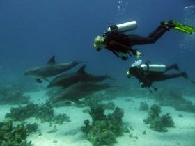 Anders tauchen – Delfin als Vorbild www.swdf.de